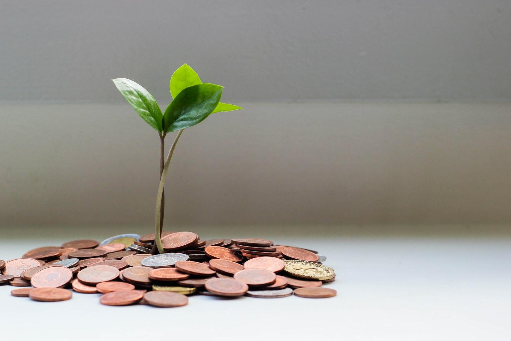 moneygrowing